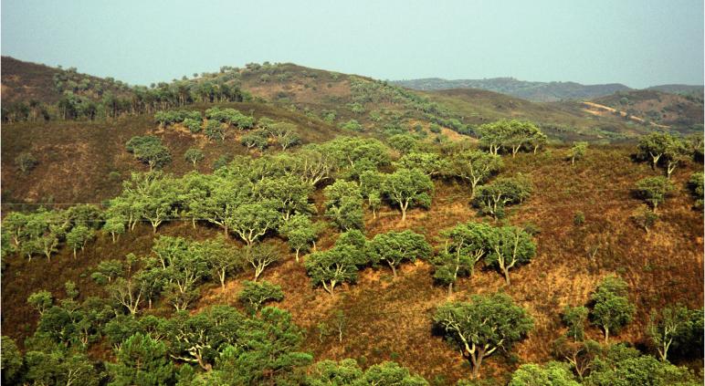 Le liège, véritable merveille de la Nature, possède des qualités mécaniques, chimiques et organoleptiques hors du commun.