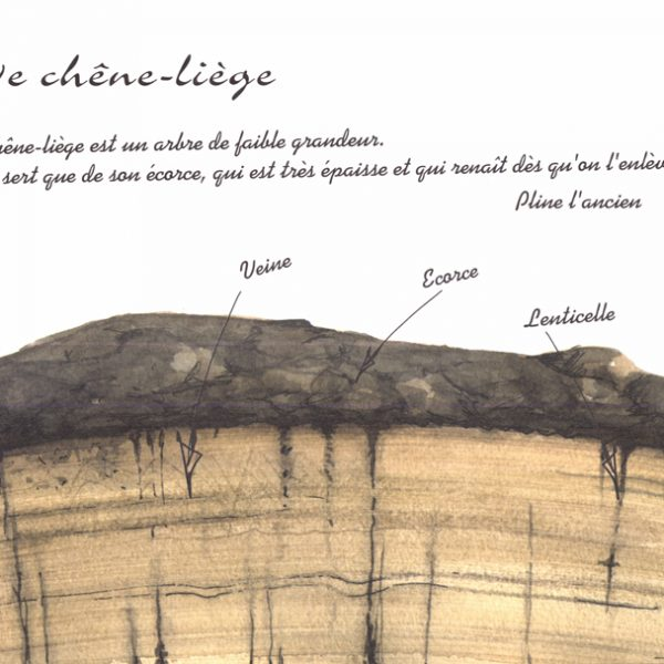 Livret illustré Le Bouchon à Champagne par Barangé - Le chêne liège